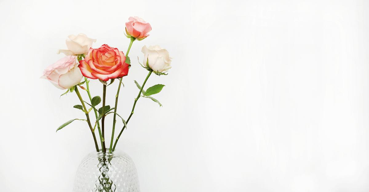 Tuinplant van de maand juni: de roos praxis blog